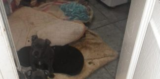 A litter of pups in squalid conditions.