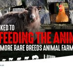 Stop Feeding the Animals