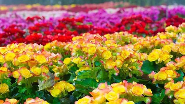 Floral grant scheme