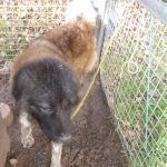 The dog was kept in conditions which were deemed to cause suffering.