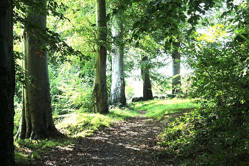 Huntley Wood