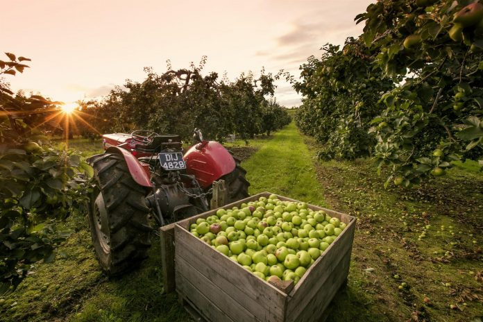 Armagh Apple Orchards Tourism Experience