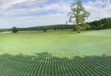 Picture of green field