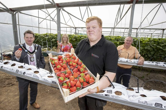 three males and one female in strawberry polytunnel